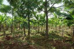 Agroforst Farmzufahrt